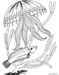 free coloring pages jellyfish detailed jellyfish realistic coloring page to print for free