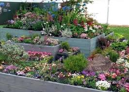 Rock Garden Plants Uk Rock Garden Plants Uk Year On Year Many Of The Plants Are The Same