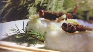 insecte cuisine la cuisine aux insectes 24