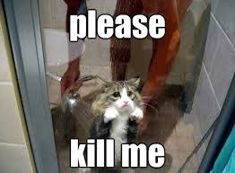 For Me Meme - kill me kill me meme please kill me funny cute critters