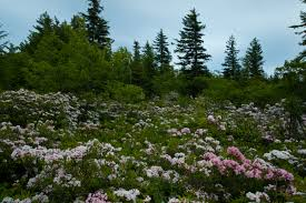 West Virginia forest images West virginia forest field flowers flowers free nature pictures jpg