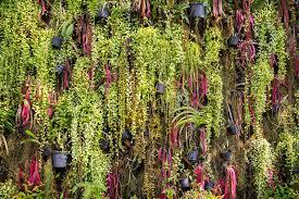 fern plants in flower pots vertical indoor garden wall in gard