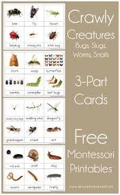 printable montessori curriculum insect printable cards 1 1 1 1 montessori printables nature