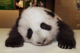 Unhappy Meme - sad panda know your meme