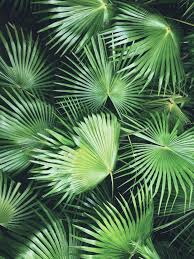 Tropical Plants Images - 258 best discover l this green images on pinterest plants