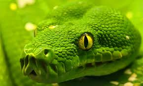 How To Avoid Snakes In Backyard How To Prevent Snakes In Your Compound With Plants