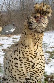 120 best birds pheasants partridges quail chickens and turkeys