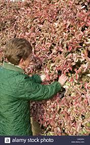 gathering foliage flower arranging in winter climbing wall shrub