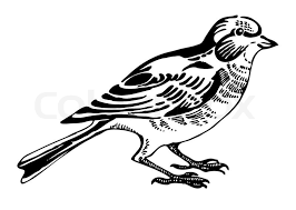 hand drawn sparrow bird sitting on a branch stock vector colourbox