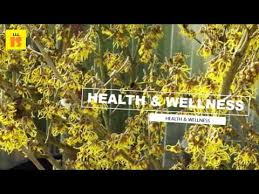 witch hazel for ingrown hair witch hazel for ingrown hair how to reduce the growth of ingrown
