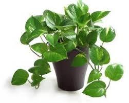 Indoor Plants Low Light Hgtv by Indoor Lighting For Plants To Grow