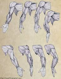 112 best how to draw arms images on pinterest anatomy study