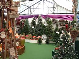 christmas trees trowbridge trowbridge garden centre