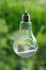 in light bulbs 17 light bulb terrarium diy ideas guide patterns
