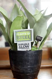 5 easy to grow low light house plants to add a bohemian vibe to