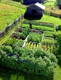 22 ways for growing a successful vegetable garden vegetable