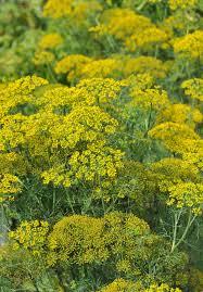 native wisconsin plants 4 can u0027t hardly kill u0027em plants for wisconsin butterfly gardens wuwm