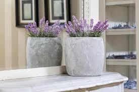 easy flowers to grow indoors growing lavender indoors hgtv
