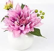 dalia in vaso stai cercando artplants vasi lionshome