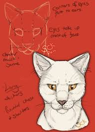 cat anatomy study shadowcatskey tutoriales