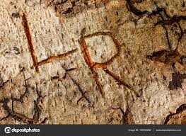 initials carved in tree tree carving initials stock photo fotoluminate 133164252