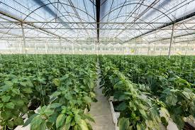 greenhouses airius fans