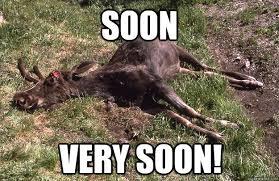 Moose Meme - moose meme 28 images funny moose memes image gallery moose