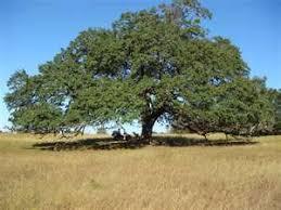 best trees to plant in south plumbsuper plumbing