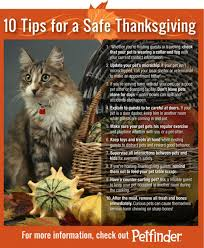 on thanksgiving keep your pets safe and remember the kneady