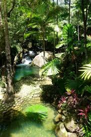 135 best daintree rainforest images on pinterest rainforests