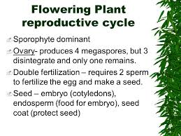 introduction to plant reproduction ppt video online download