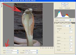 converter raw editing in capture one raw conversion program