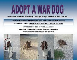 afghan hounds for adoption military dog adoption contract working dogs military war dogs
