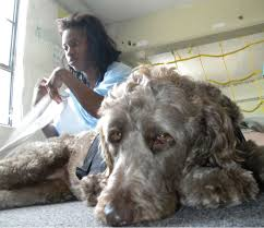 Rescued dog finds work at NCSD News