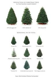 best 25 noble fir christmas tree ideas on pinterest xmas tree
