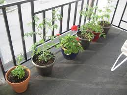 Hanging Vegetable Gardens by Lawn U0026 Garden Lovely Small Balcony Gardening Ideas With Glass