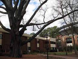 atlanta s chion trees trees atlanta