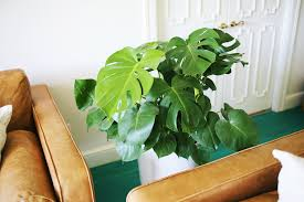 Easy Care Indoor Plants Five Easy To Care For Houseplants U2013 A Beautiful Mess