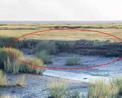 salt marsh dieback timeline cape cod national seashore u s