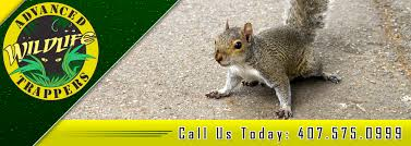 squirrel pest control trapping and removal in central florida