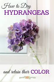 Hydrangea Flowers The Essential Guide To Growing Hydrangeas
