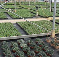 sci horticulture newsletter october 2011