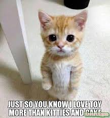 I Love You More Meme - just so you know i love toy more than kitties and cake meme kitten