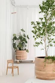 395 best home i pflanzen images on pinterest plants indoor