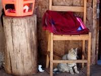 Cat Under Chair Cat Playing Under Christmas Tree Stock Photos Freeimages Com