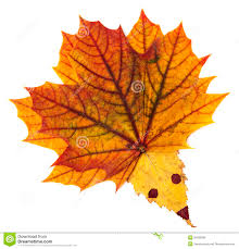 hedgehog made from autumn leaves royalty free stock image image