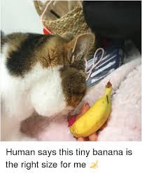 tiny banana human says this tiny banana is the right size for me meme on me me