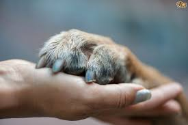 trimming your dogs claws a step by step guide pets4homes
