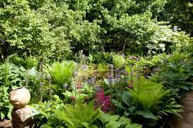 types of garden shade in pictures gardenersworld com