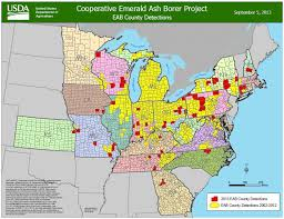 emerald ash borer map ash borers frozen to likely to recover woodworking